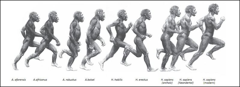 National Geographic Evolution of a Running Naked Man